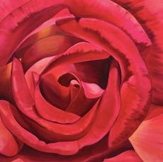 Large Pink Rose