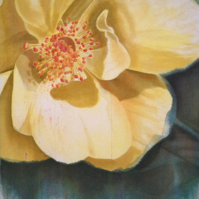 Wild Yellow Rose