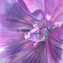 Long Pink Petals