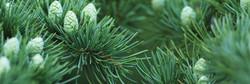 natura-siberica-edinstvena-podlaga-izdelkov.jpg