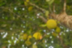 jack fruit .jpg