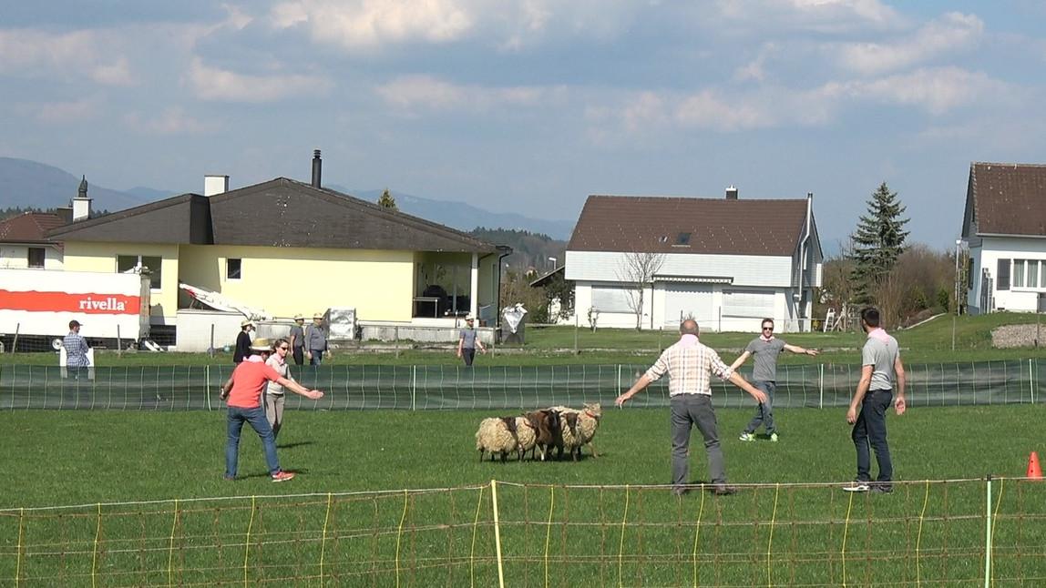 Sheep Whisperer 1.jpg