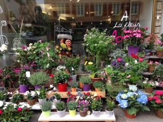 Magnifique choix de plantes fleuries
