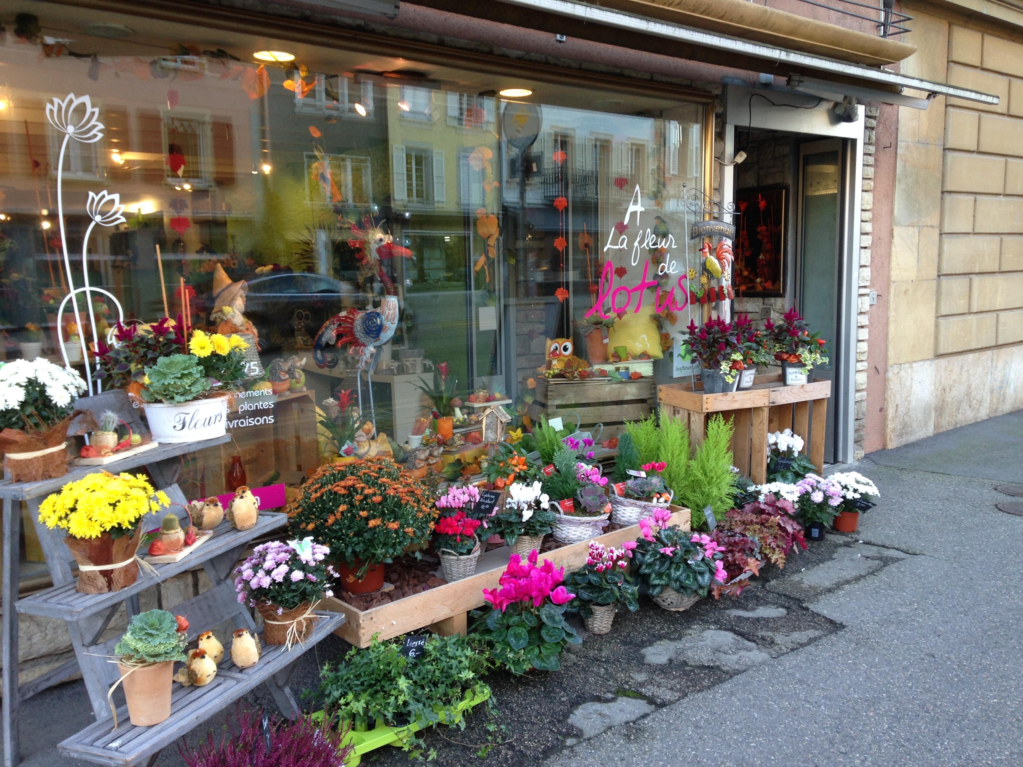 plantes extérieur