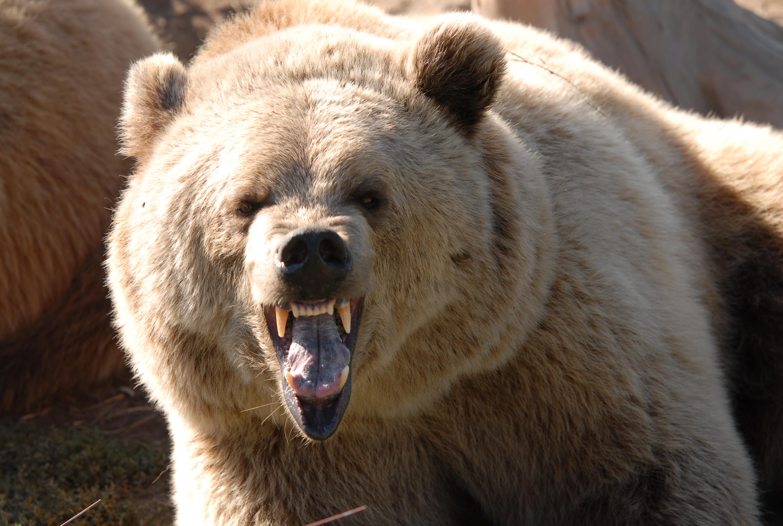Lekrib Bear