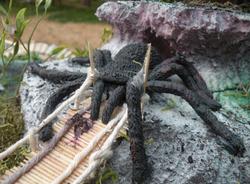 spider guarding bridge