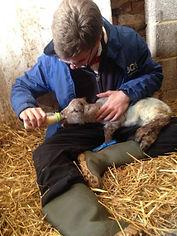 james & lamb2.jpg
