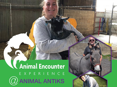 Animal Encounter (12+ to adults)