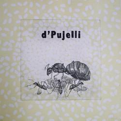 d'Pujelli