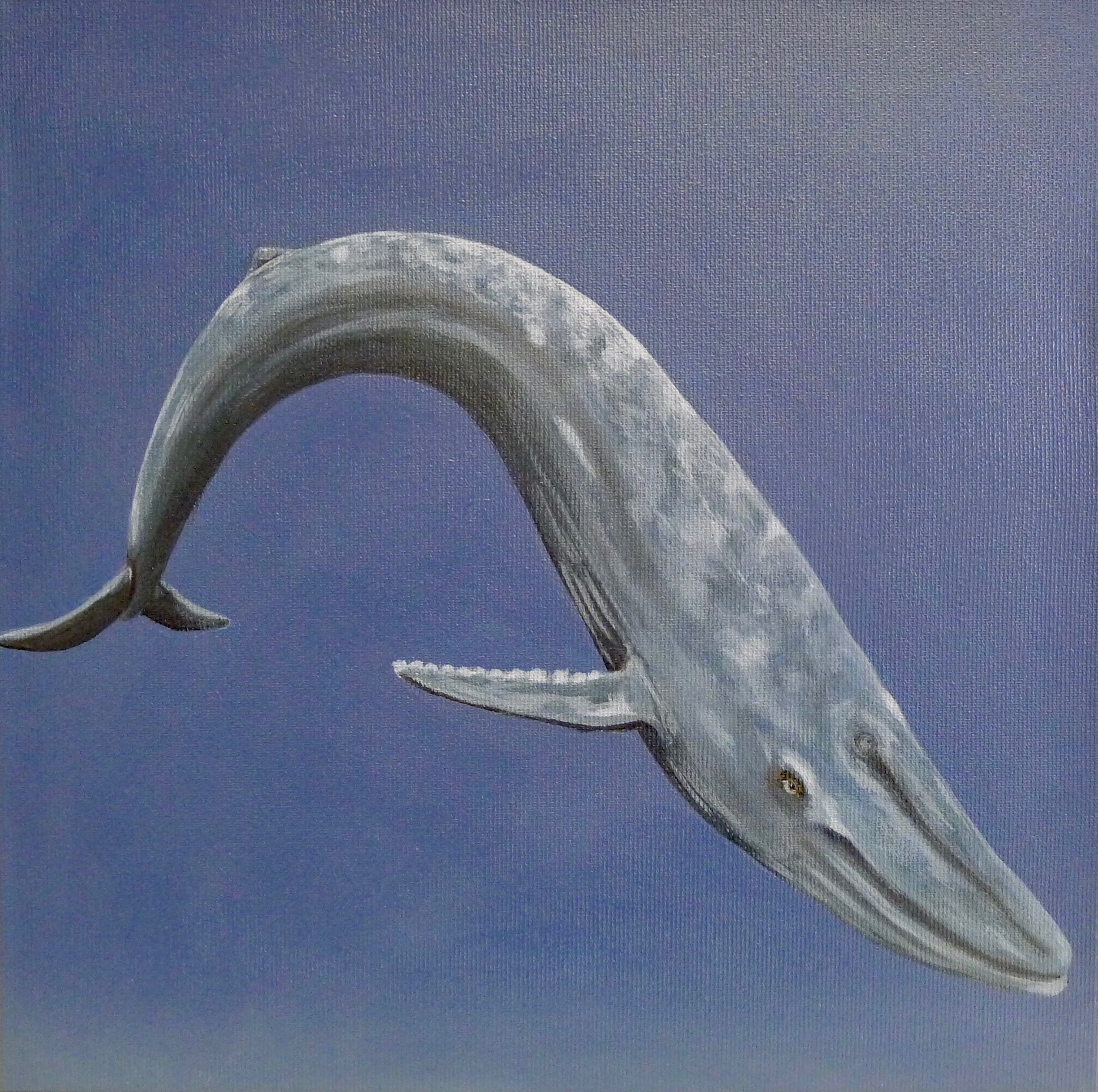 The Bluewhale