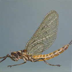 The Mayfly