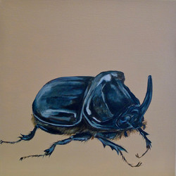 The Rhinoceros Beetle