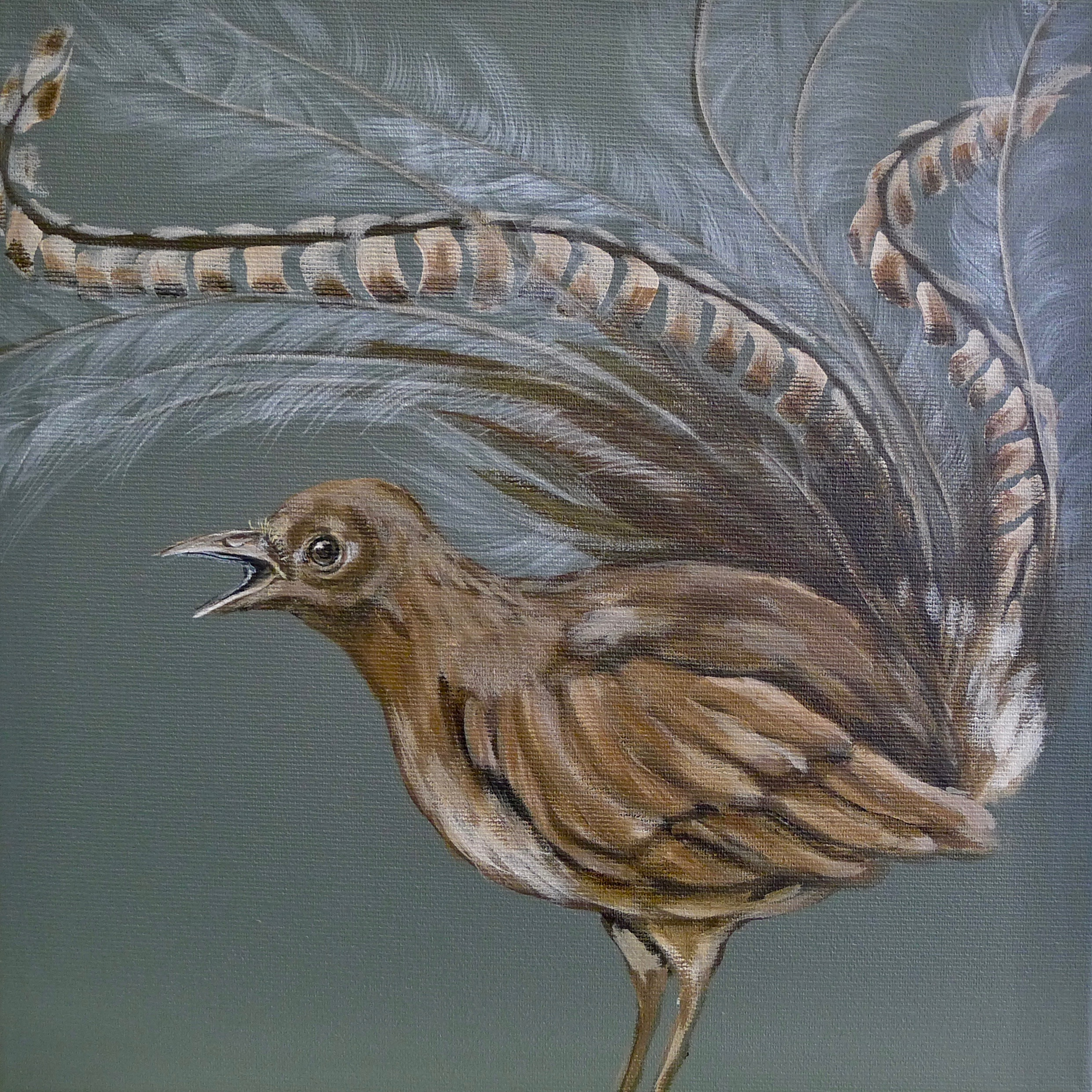 The Lyre Bird