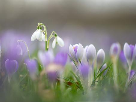 February- The garden awakens!