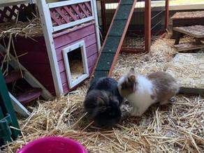 Stella und Lucy suchen gemeinsam ein neues zu Hause