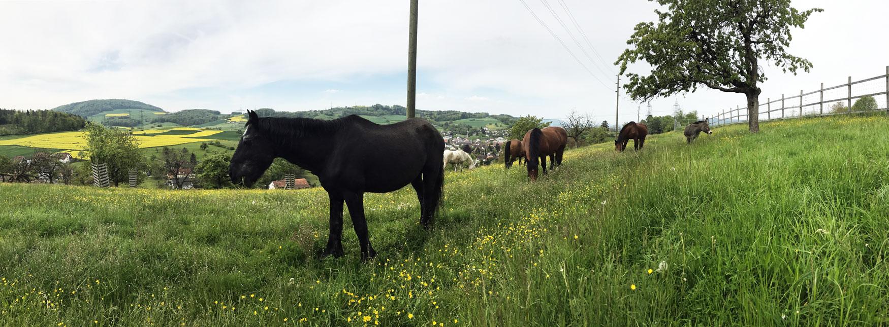 Panorama-Timon