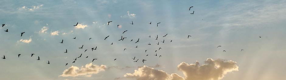Vögel am Himmel, Freiheit, Hilfe bei Angst und Panik