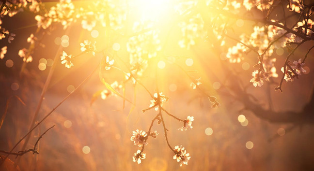 Strauch mit schönem Licht, Angst vor dem Tod.