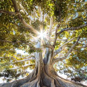 Psalm 1- Like A Tree