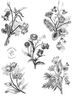 Language of Flowers by Natasha Tsozik