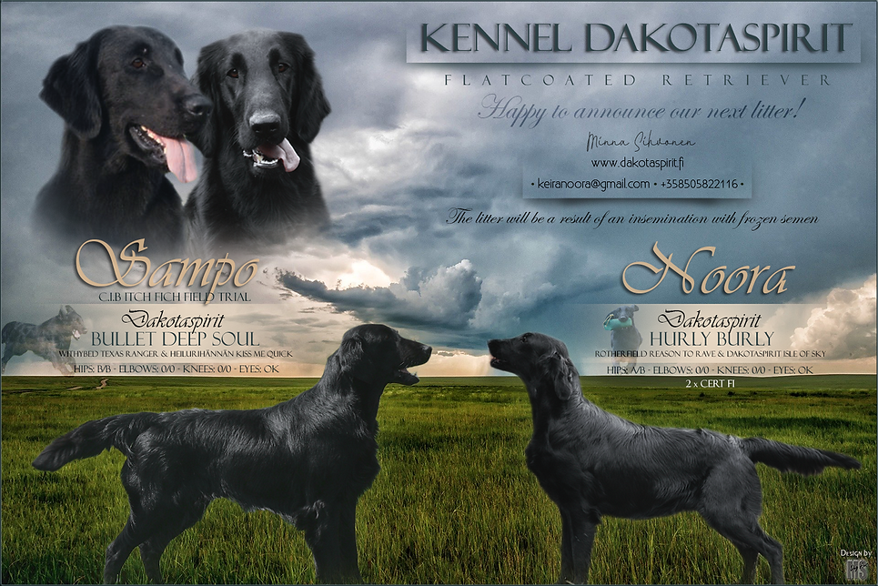 Dakotaspirit puppy announcement.png