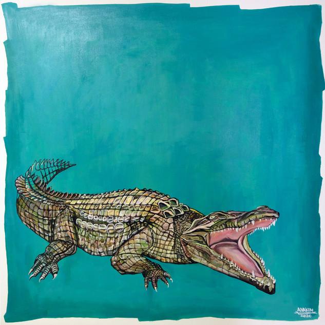 Alligator, 2020