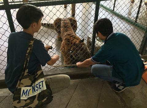Target Training Tigers