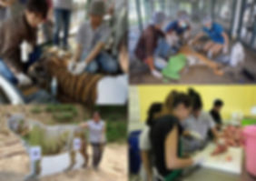 Education & Research at Tiger Kingdom Thailand