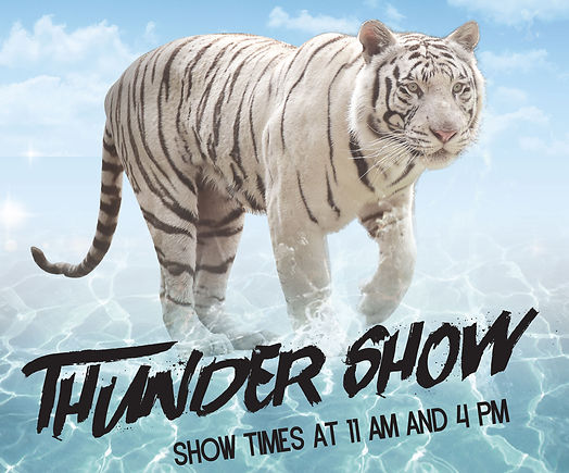 Thunder Show, Tiger Feeding/Enrichment at Tiger Kindom Mae Rim Chaing Mai