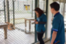 Daily Routine Health Check at Tiger Kingdom