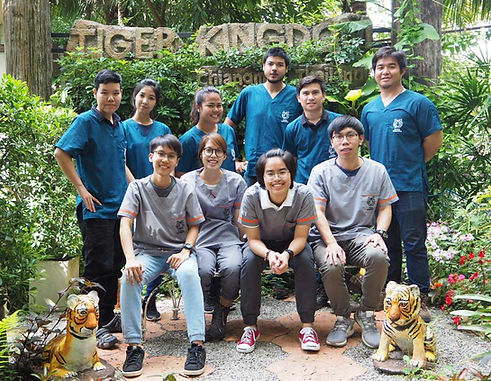Tiger Health Care (Veterinary) Team at Tiger Kingdom Chiang Mai