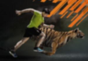Run Wild For Tigers at Tiger Kingdom Mae Rim Chiang Mai