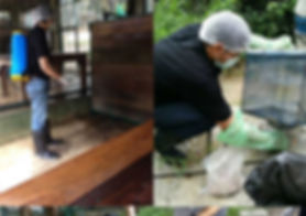 Pest Control at Tiger Kingdom
