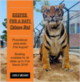 Keeper for a Day, Tiger Kingdom Learning Center, Mae Taeng Chiang Mai, promotion ending