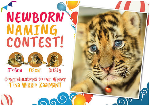 Tiger Kingdom Phuket newborn cubs naming contest