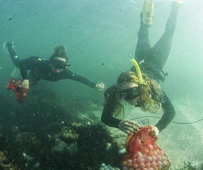 Freedivers Help Clean Up Thousands of Golf Balls Littering Ocean Outside Pebble Beach Golf Links
