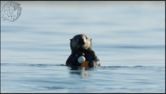 otter with ball edit.png