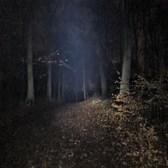 Hareskoven (In Darkness), Denmark (6 KM) 10th December 2020 (5)