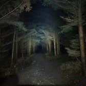 Hareskoven (In Darkness), Denmark (10 KM) 30th November 2019 (4)