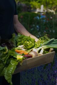 Evergreen Catalogue veg box.jpg