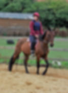 Manor Farm Riding Stables in Lyng Norfolk
