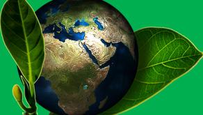 Despertando a Consciência Ecológica