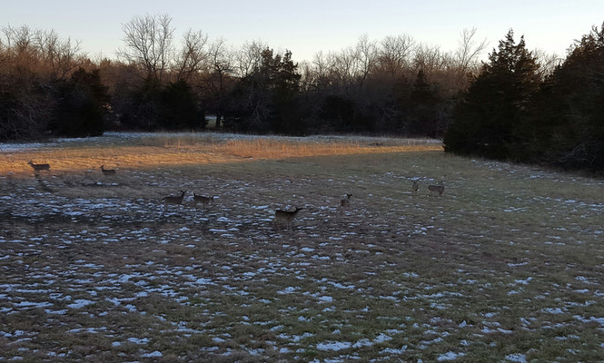Taking care of the land kept us in venison. This is the view from the deer tower. It was an average night to see 8 to 10 deer. The deer blind was located only 100 yards from the house.
