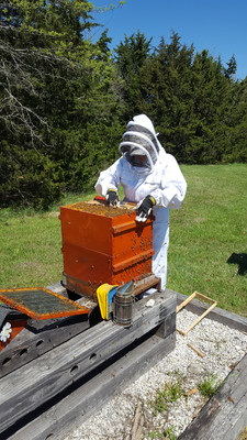 Adrienne tending the bees.