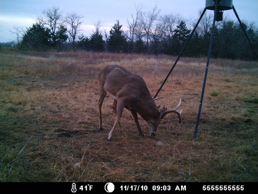 This is a game camera photo of one of the deer we missed out on harvesting during bow season.