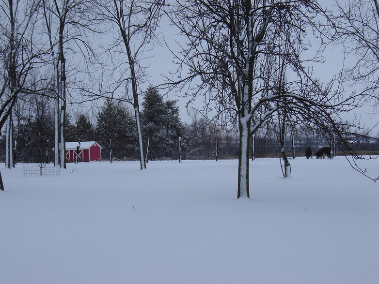 Lugging a five-gallon bucket of water out to the pigs was a lot of work in winter weather conditions.