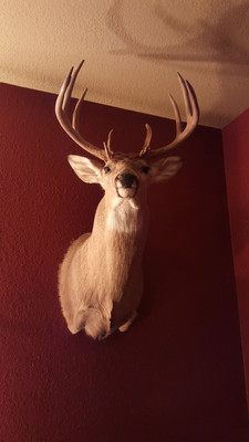 I had to wait five months to get my mount back from the award-winning taxidermist Alex Zajac.