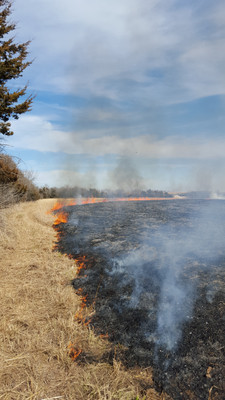 Grass fires are set intentionally in Kansas to burn pasture to create carbon and nitrogen to improve the soil. It is also used to coax certain prairie grass seeds into sprouting that must be exposed to fire before germination.