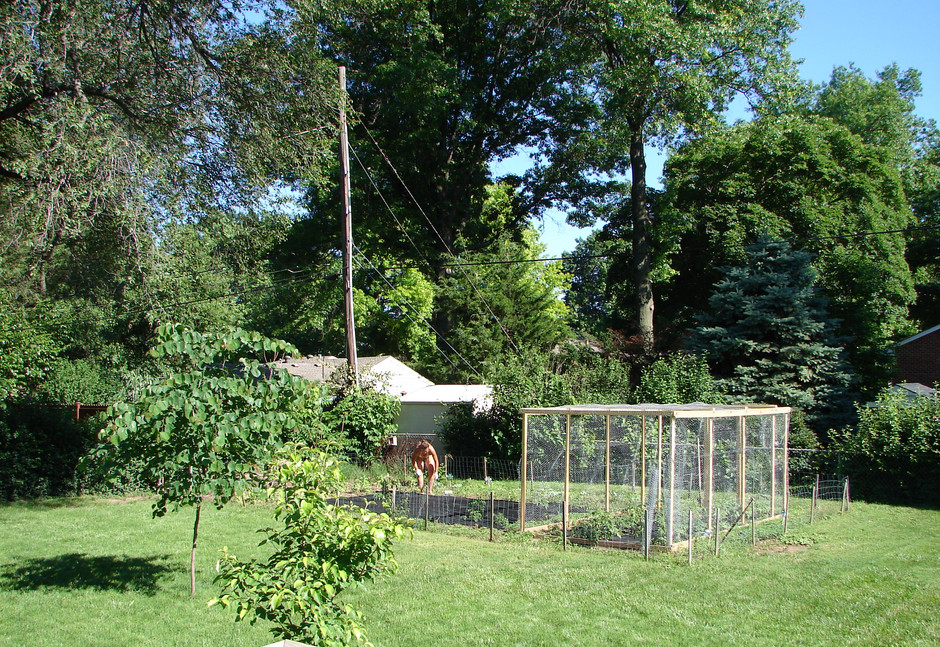 My first garden. I had a lot to learn. Rabbits would eat all of my seedlings, and squirrels would eat everything else. I put up a rabbit fence, and Ronnie built me a tomato cage to keep squirrels out, but it also kept the birds out, so worms ate most of the tomatoes.