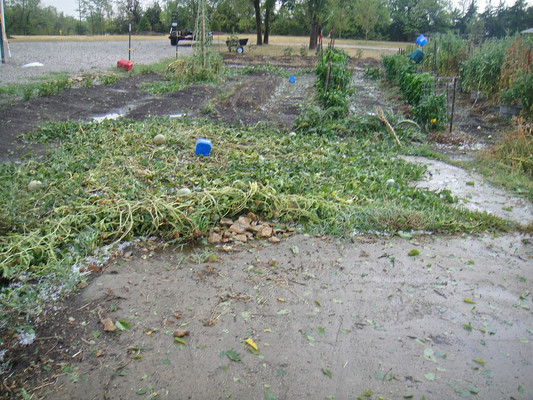 Nothing much was spared. Everything had stem damage. My melons were covering this concrete pad completely.